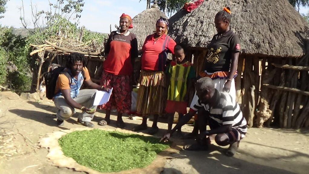 haramaya university thesis Tessema zewdu, haramaya university, livestock production and range land managment department, department member studies ecology, conservation biology, and.