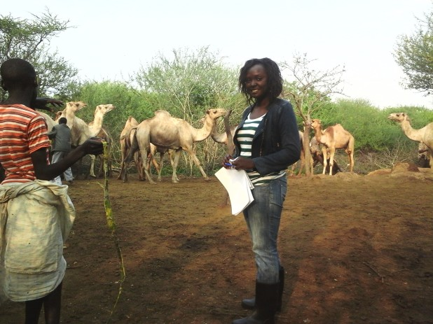 No more fear: The writer among a herd of camels