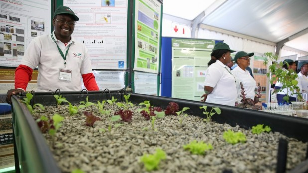 Above: Seedlings grown from tissue samples in a laboratory being showcased during the exhibition at the ARC, South Africa. Photo Credit: Photo by IISD/Kiara Worth