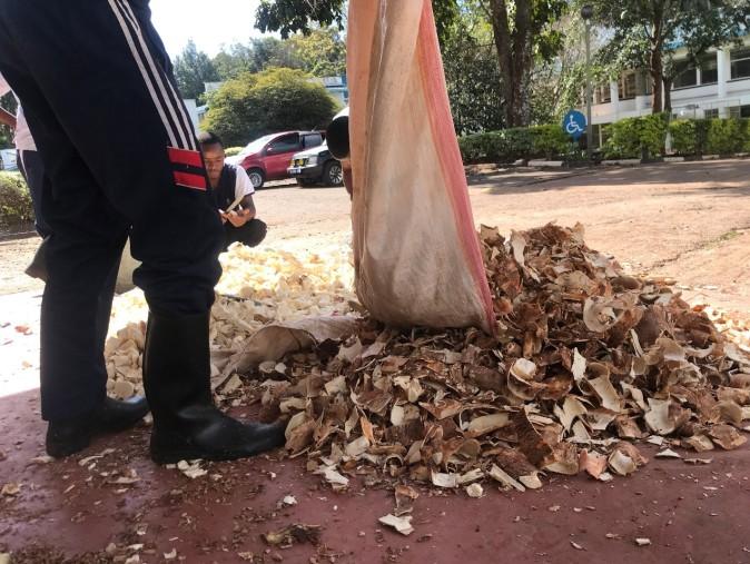 Cassava Peels2